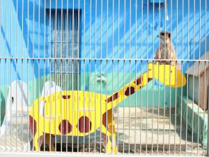 キリンとミーアキャット